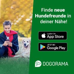 Dogorama, finde Hundefreunde in deiner Nähe!