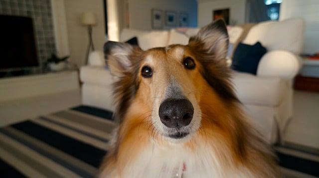 Hund schaut in Kammera