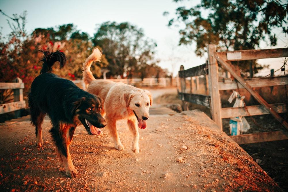 Hunde gemeinsam im Park