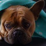 Hund unter der Decke
