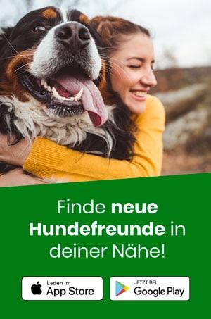 Finde neue Hundefreunde in deiner Nähe!