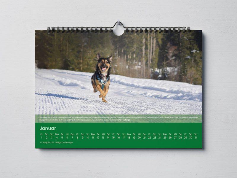 Dogorama Kalender