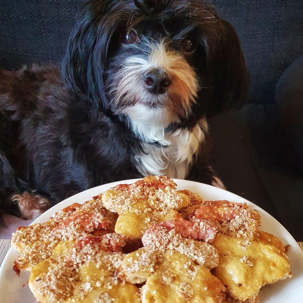 Hund beim plätzchen essen