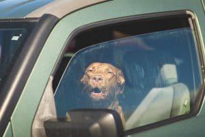 Hund sitzt alleine im heißen Auto