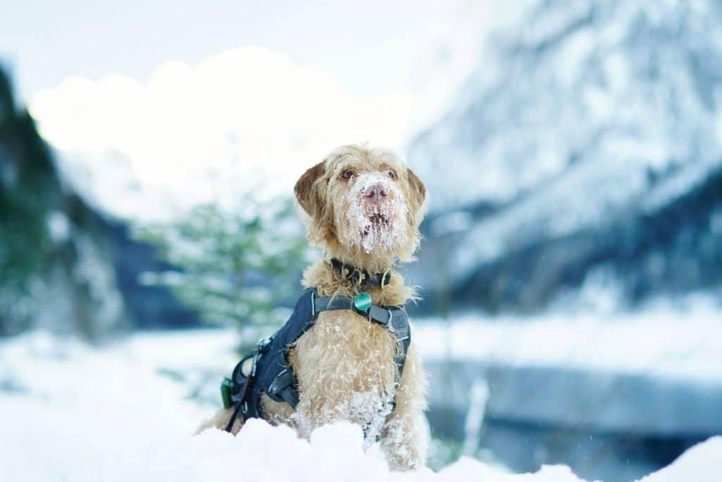Hund sitzt im Schnee
